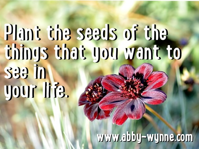 How to Plant Seeds for the Year